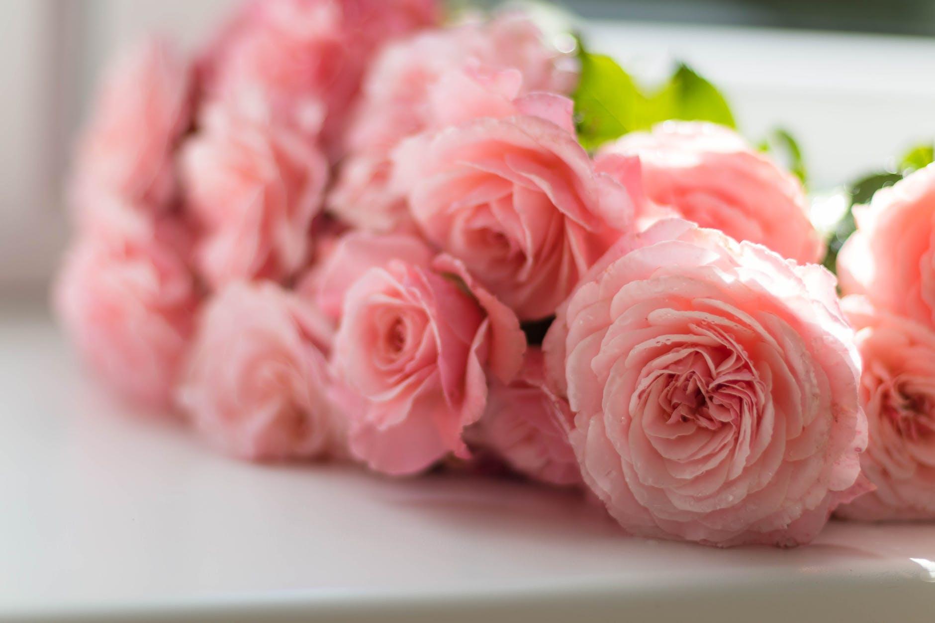 Frases de amor para enamorar y dedicar